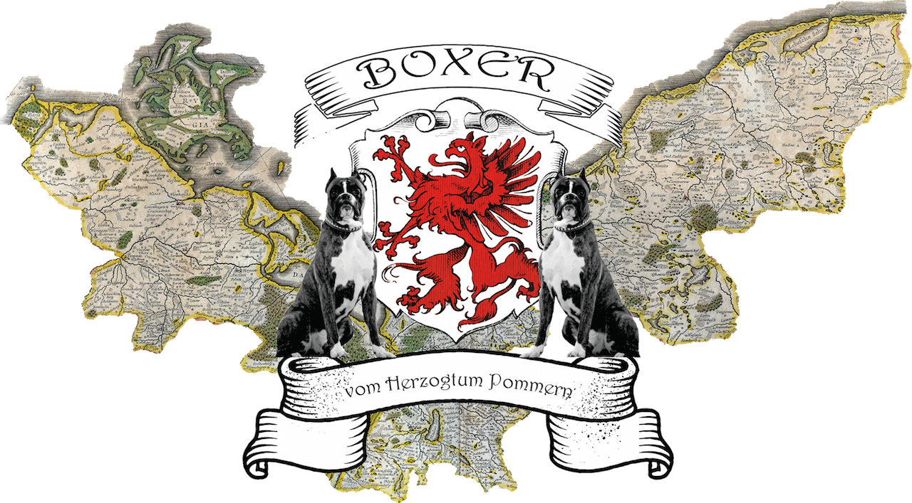 Boxer vom Herzogtum Pommern